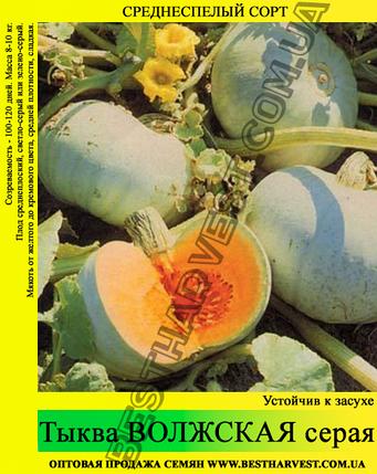 Насіння гарбуза Волзька Сіра 0,5 кг, фото 2