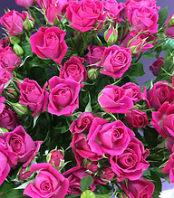 """Троянда спрей """"Лавлі Лідія"""""""
