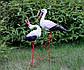 Влюбленная пара аистов - садовый декор из керамики на металлических лапках (УБ), фото 2