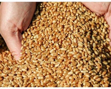 Озимые семена