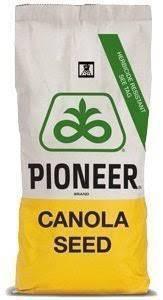 Гібрид озимого ріпаку ПР46В21 Піонер (Pioneer PR46W21)