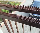 Шипы Chomik от птиц и животных 5 м коричневые, фото 3