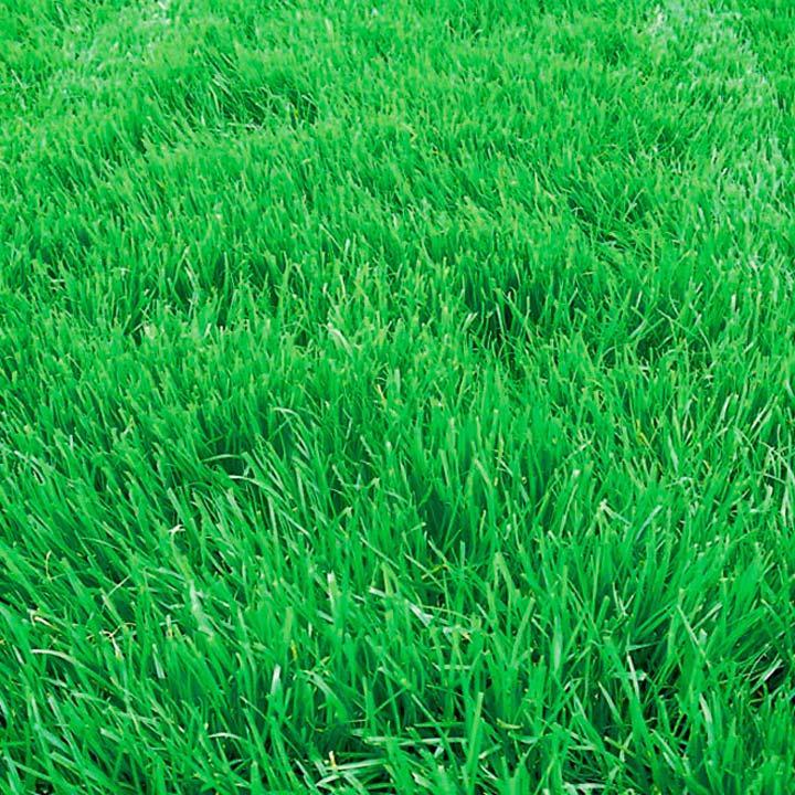 Гербицид для клевера ползучого декоративного клевера для газона, трави от сорняков