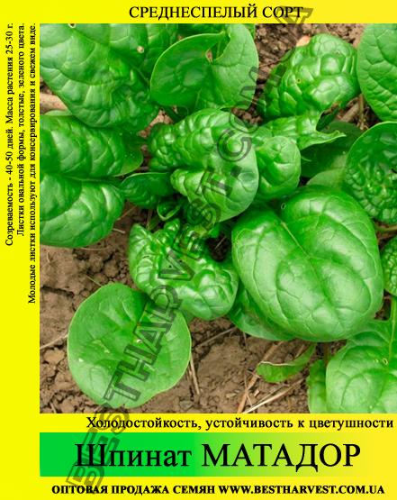 Семена шпината «Матадор» 10 кг (мешок)