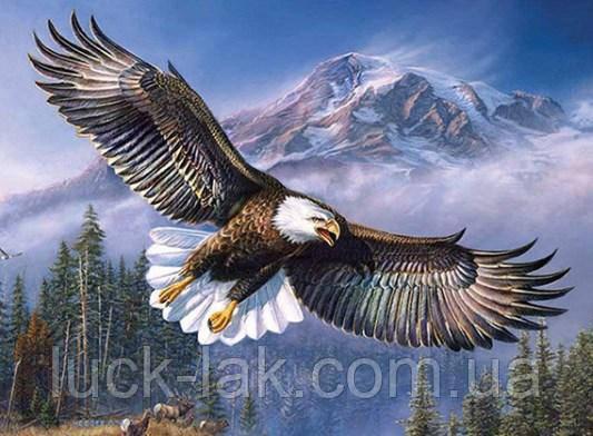 Алмазная вышивка, орел в небе 40х30 см, полная выкладка