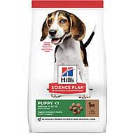 Hills puppy medium сухой корм для щенков средних пород с ягненком и рисом - 2,5кг