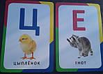 Буквар (Розвиваючі картки, 3+). Розумні картки, фото 4