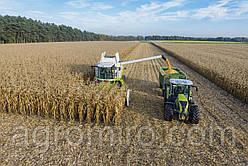 Корисні поради з прибирання кукурудзи