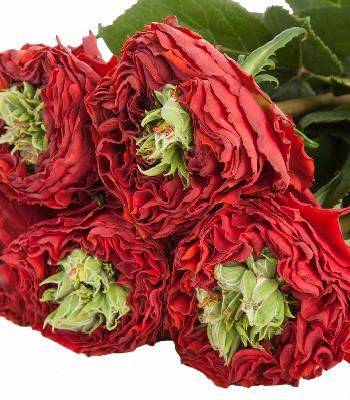 """Троянда """"Red Eye"""""""