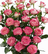 "Троянда спрей ""Сафіна"""