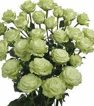 "Троянда спрей ""Грін Глоу"""