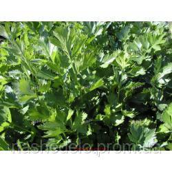 Эмна листовой сельдерей, 1 кг