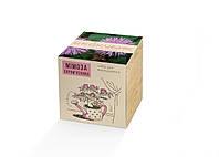 Набор для выращивания Экокубик Мимоза стыдливая HMD (114-10822165)