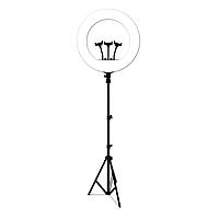 Кольцевая лампа со штативом LED RL-21 три крепления с пультом 54 см