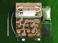 Формикарий акриловый (муравьиная ферма) с принтом + муравьи жнецы (messor structor) + корм