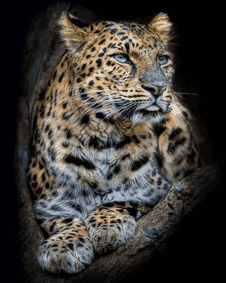 Картина за номерами Babylon Гордий леопард 40*50 см арт.VP684, фото 2