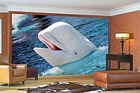 "Фото Обои ""Белый дельфин"""