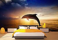 """Фото Обои """"Дельфин и рассвет"""", фото 1"""