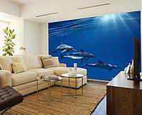 """Фото Обои """"Дельфины на морском дне"""", фото 1"""