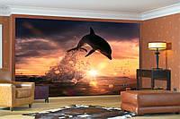 """Фото Обои """"Оранжевый закат и дельфин"""", фото 1"""