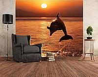 """Фото Обои """"Оранжевый закат с дельфином"""", фото 1"""