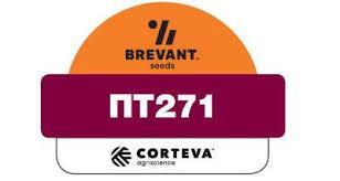 Насіння озимого ріпаку ПТ271 Піонер (РТ271)