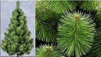 Сосна елка искуственная 2.3м (Микс)