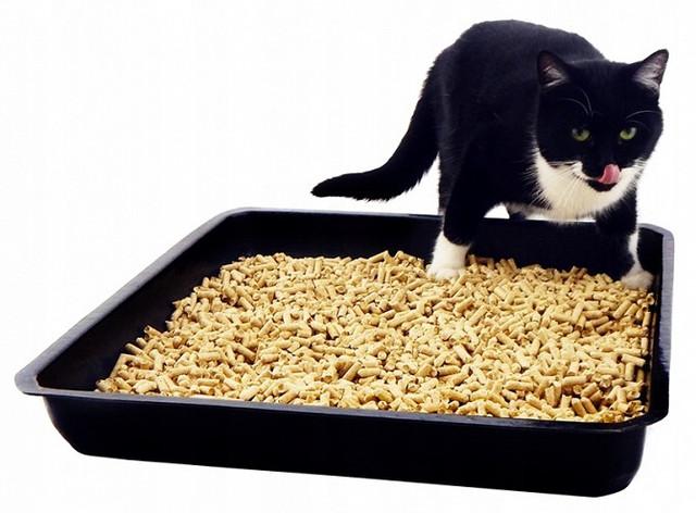 Наполнители для кошек и котов