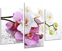 Красивая комнатная модульная картина на холсте в спальню Orchid AMD 015, 96х70 см