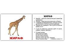 Комплект карток Дикі тварини з фактами