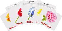 Комплект карток Квіти з фактами