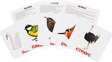 Комплект карток Птахи з фактами