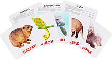 Комплект карток Екзотичні тварини з фактами