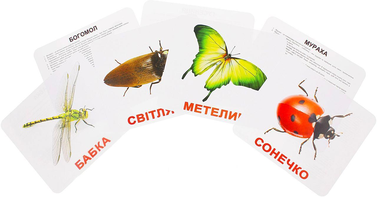 Комплект карток Комахи з фактами