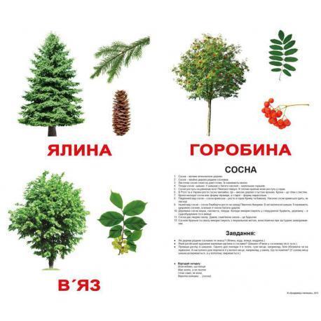 Комплект карток Дерева з фактами