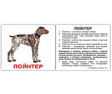 Комплект карток Породи собак з фактами