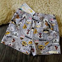 Детские шорты собачки в очках Five Stars HD0321-128p
