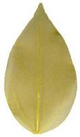 Сухой лист 10 жёлтый для дизайна ногтей