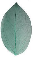 Сухой лист 11 зелёный   для дизайна ногтей