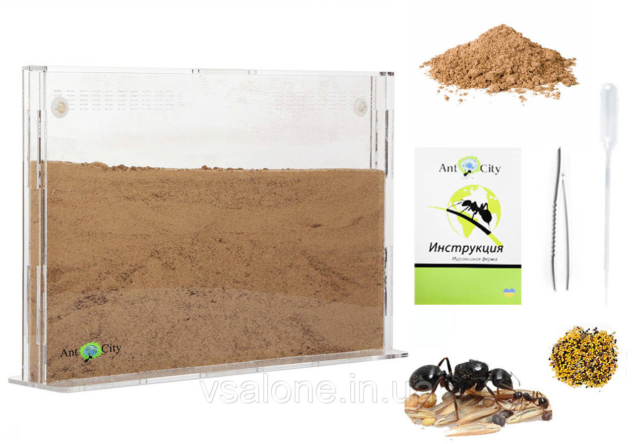 Песчаная муравьиная ферма Эко Акрил Комплект для новичка, формикарий для муравьев
