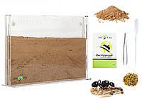 Песчаная муравьиная ферма Эко Акрил Комплект для новичка, формикарий для муравьев, фото 1