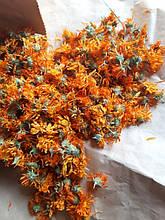 Календула (ноготки), лекарственные растения / цветки календулы