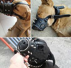 Кожаный намордник для собак рептилия с шипами черный