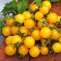 МИНИГОЛД / MINIGOLD  — томат детерминантный, SEMO 5 грамм