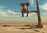 Фотообои флизелиновые 3D 416х254 см Слон на дереве (11898CN)