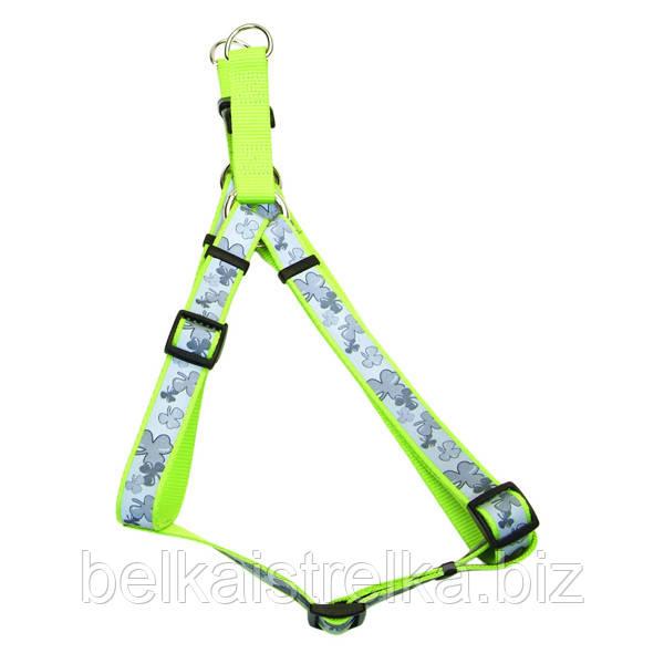 Светоотражающая шлея для собак Coastal Lazer, 1,6х48-66 см, клевер, 46455_SHM24