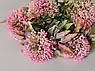 Искусственные цветы. Букет аллиума, розовый, фото 2