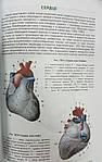 Анатомия человека. 200 цветных рисунков по всем системам и органам человека, фото 5