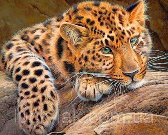 Алмазная вышивка леопард на отдыхе 30х20 см, полная выкладка, квадратные стразы
