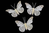 Бабочки декоративные (комплект 6шт.) (5-60757), фото 1